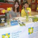 Daffodil stand 2011