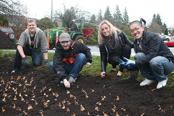 planting_daffodils